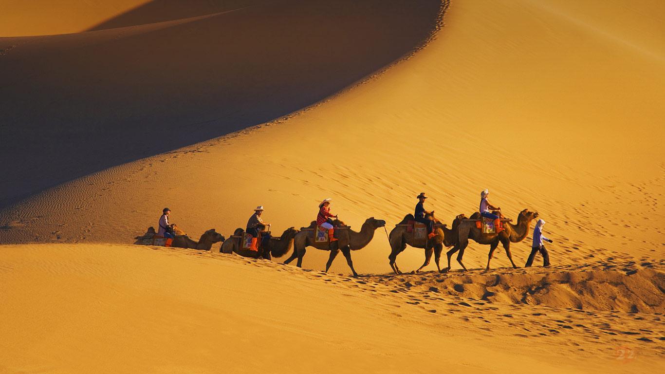 骆驼.jpeg